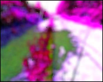 lenvironnement-paysager.jpg